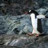「ファーストペンギン」って何?最初に飛び込むものたちが、道を切り拓き時代を創る