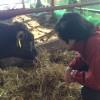 浪江町で生き抜く「被ばく牛」をご存じですか?【若干閲覧注意】